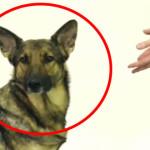 Kouzelník si vystřelil ze psů! Podívejte se na jejich vtipné výrazy