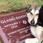 Smutný pes pláče na hrobě své paničky