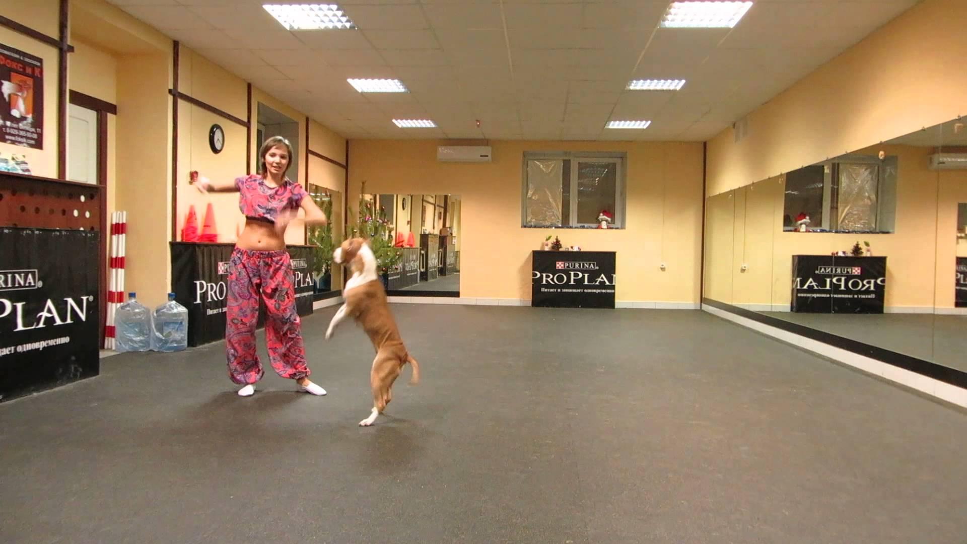 Pit Bull tančí se svojí paničkou!