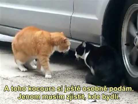 KOČIČÍ TELENOVELA: Kočky se dohadují o nevěře!