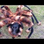 Přerostlý pavouk děsil lidi k smrti