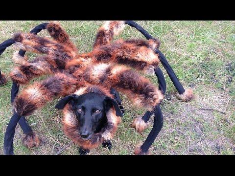 Přerostlý pavouk vyděsil lidi k smrti
