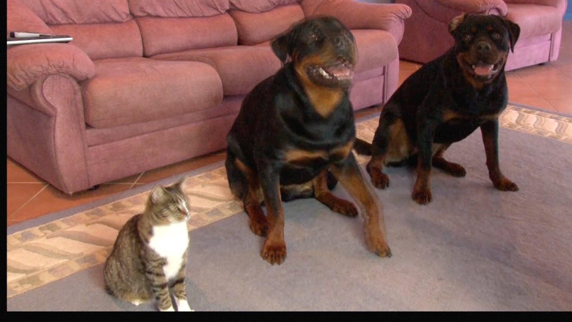 Dva psi a jedna COPY CAT – kočka, která vás překvapí!