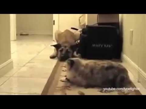 Když se psi bojí koček