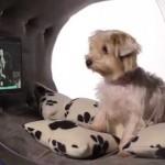 """Luxusní """"bouda"""" pro psa – to jste ještě neviděli!"""