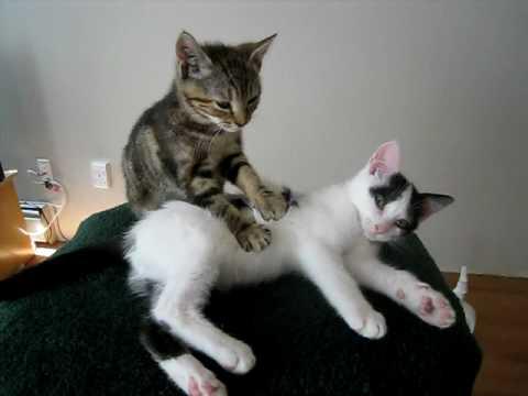 Maximálně roztomilá kočičí masáž