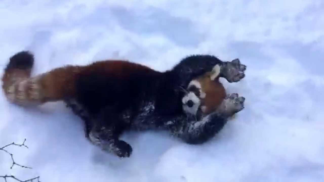 Takhle vypadá radost ze sněhu!