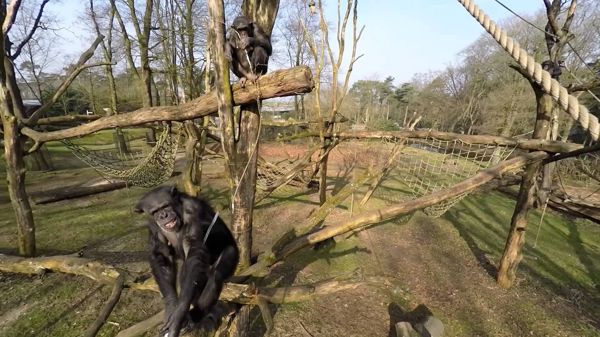 Šimpanz brutálně zaútočil na kameru!
