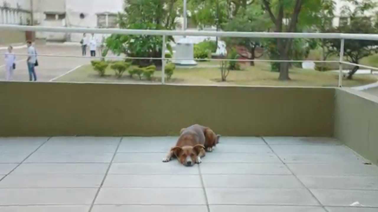 Nádherná psí věrnost, která vám vžene slzy do očí!