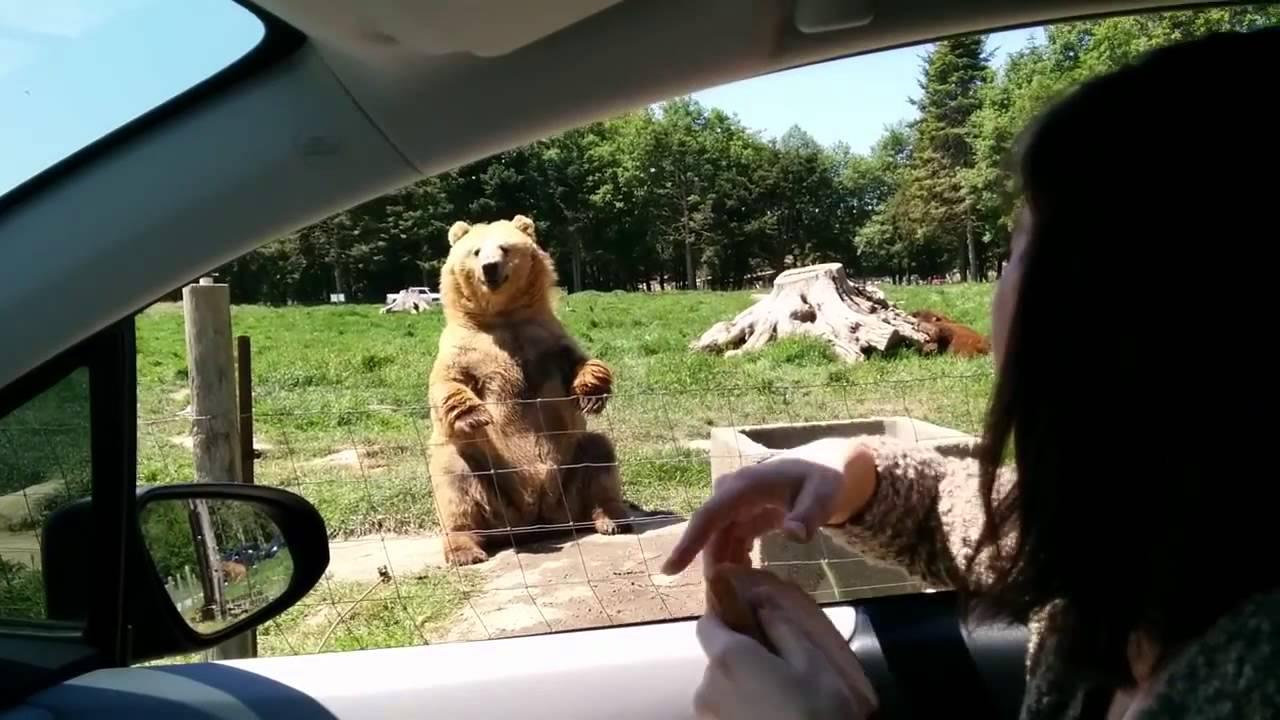 Přátelský medvídek vám za baštu i zamává!