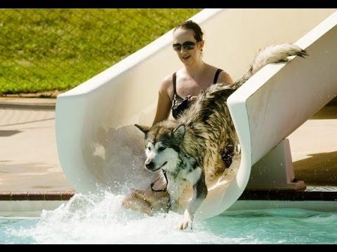 Jak si psi užívají vodních radovánek