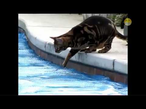 Je takové vedro, že i kočky milují vodu!