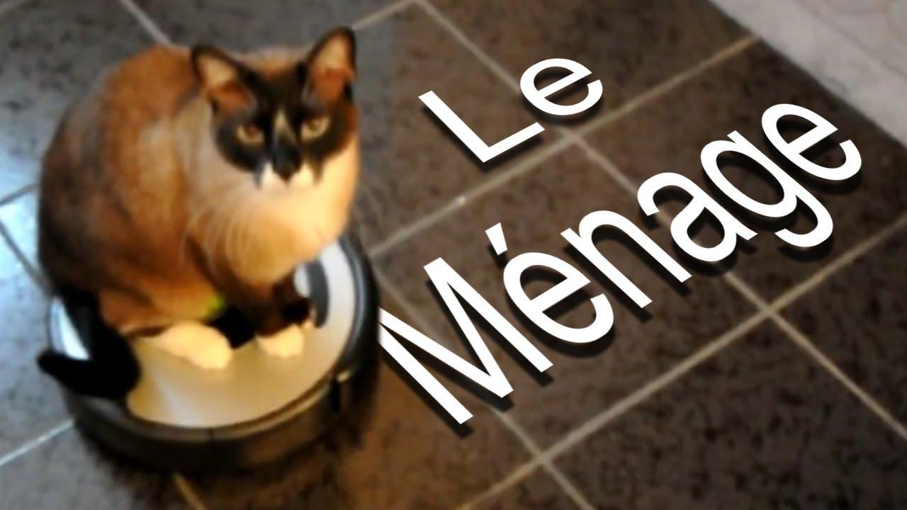 Jízda na vysavači je super – to ví každá správná kočka!