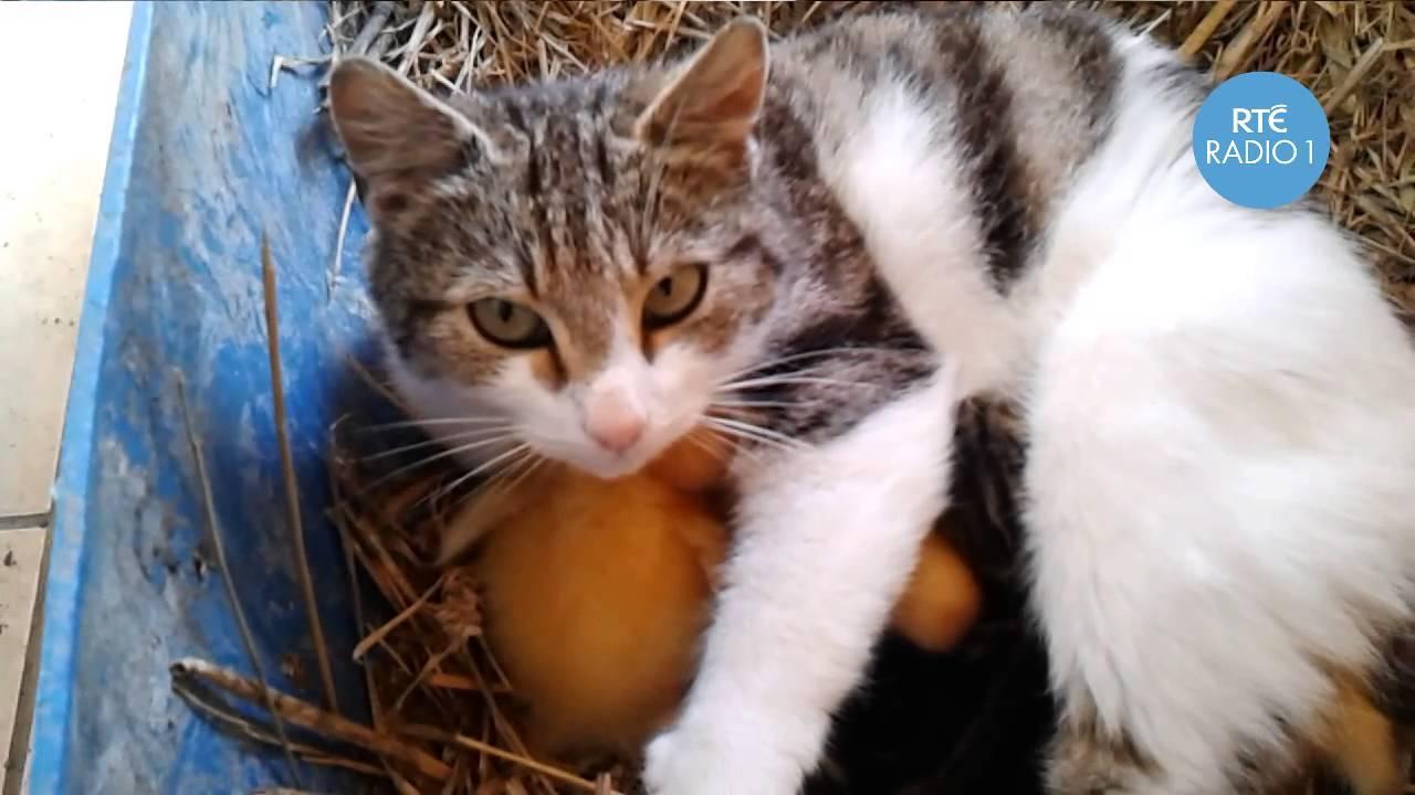 Kočičí máma pečlivě hlídá mláďata svá i ta adoptovaná