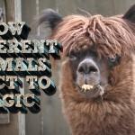 Jak reagují zvířátka na kouzla?
