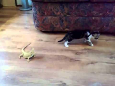 Kotě versus ještěři