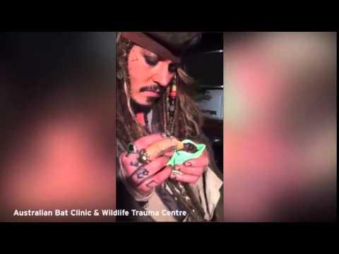 Máloco může být krásnější než Jack Sparrow při krmení Jackiho Sparrowa