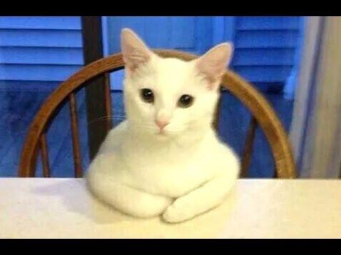 Neuvěřitelné! Tyhle kočičky se chovají jako lidé!