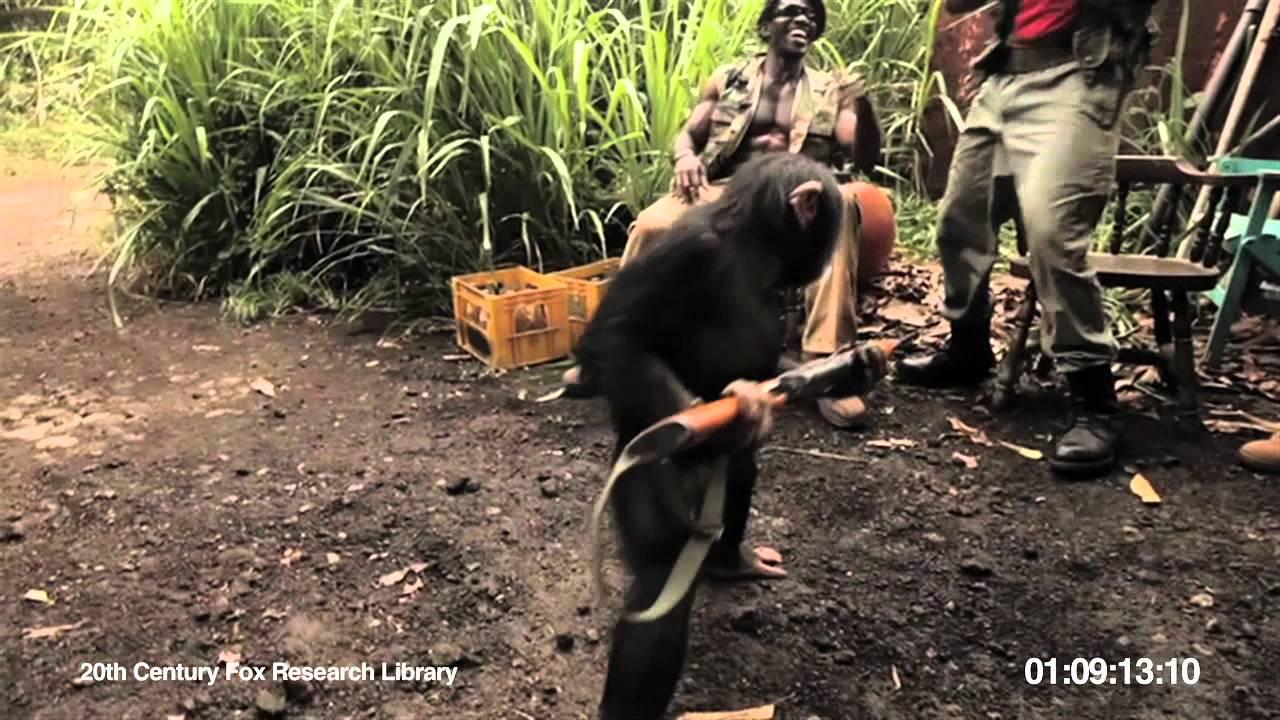 Opičák převezl machry se zbraněmi: Dělat blbosti se v džungli nevyplácí