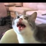 Mluvící kočky, to musíte vidět (a slyšet)!
