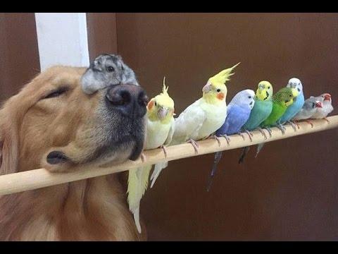 Netypické přátelství: Pes, křeček a 8 papoušků!