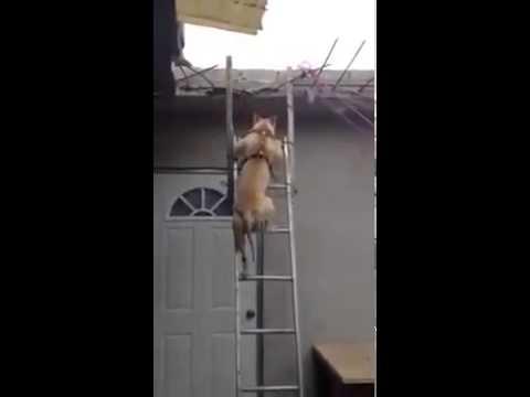 Už jste někdy viděli psa dělat tohle?