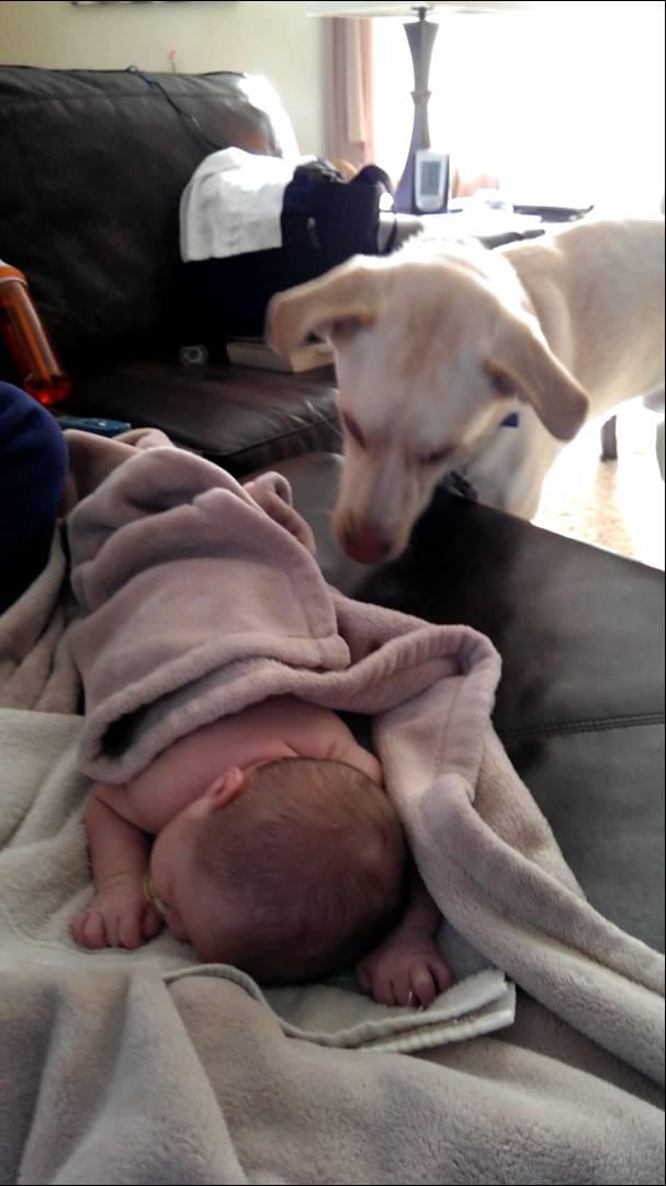 Tahle psí chůva si získá vaše srdce!