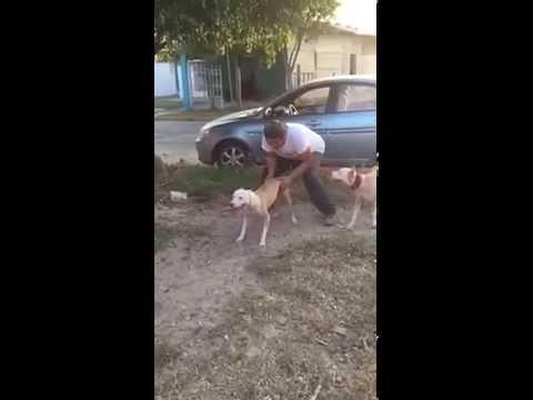Víte, jak vysoko zvládne pes vyskočit? Budete se divit!