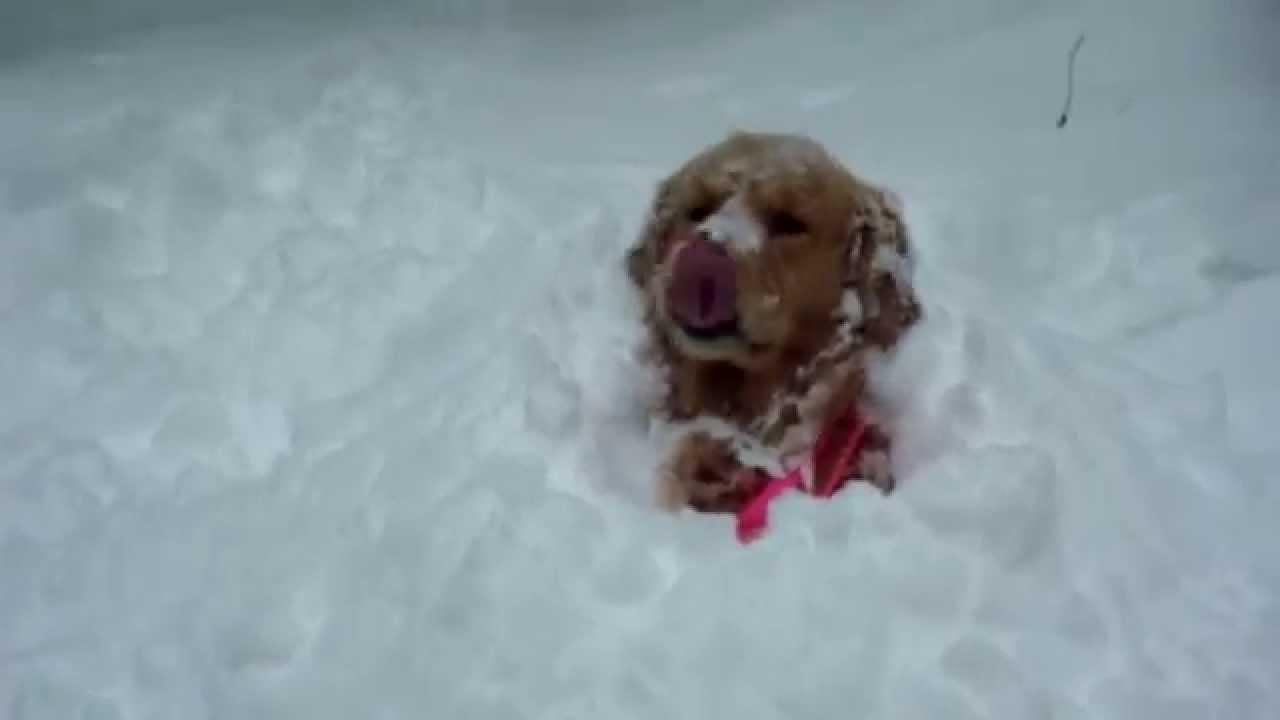 Chlupáči a jejich radost ze sněhu – Zasáhne vás také?