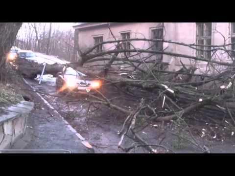 DĚSIVÉ VIDEO: Několikatunový strom padl na auto