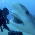 Adrenalin pod vodní hladinou: mazlení se žraloky