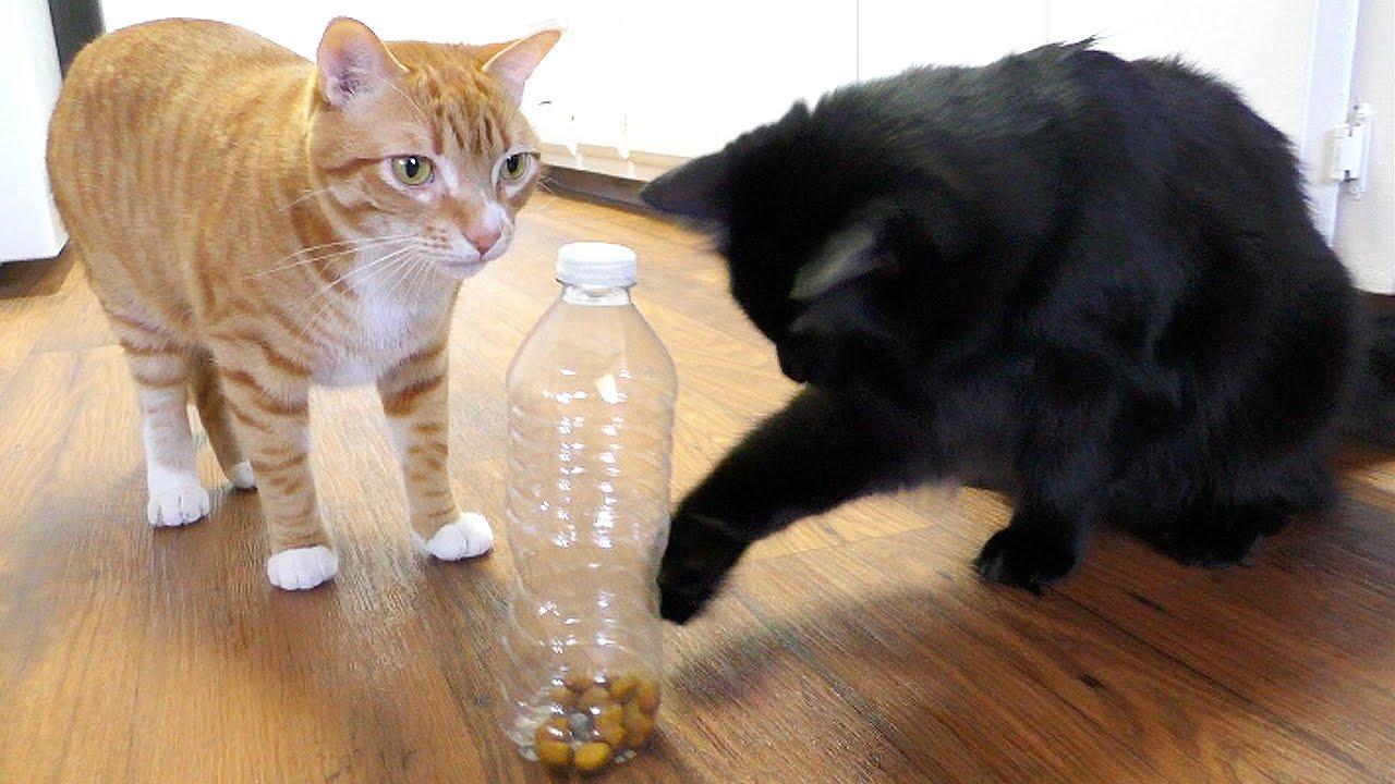 5 jednoduchých tipů, jak zabavit své kočičí mazlíčky