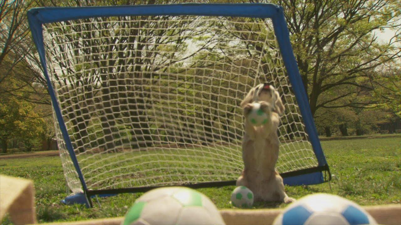 Šikovný psí brankář v  Guinnessově knize rekordů