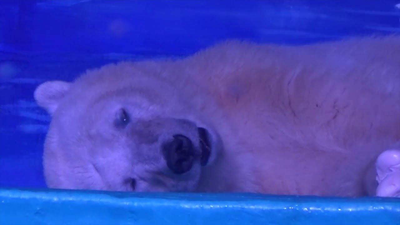 Děsivý příběh zoufalého medvěda, který přežívá v nákupním centru!
