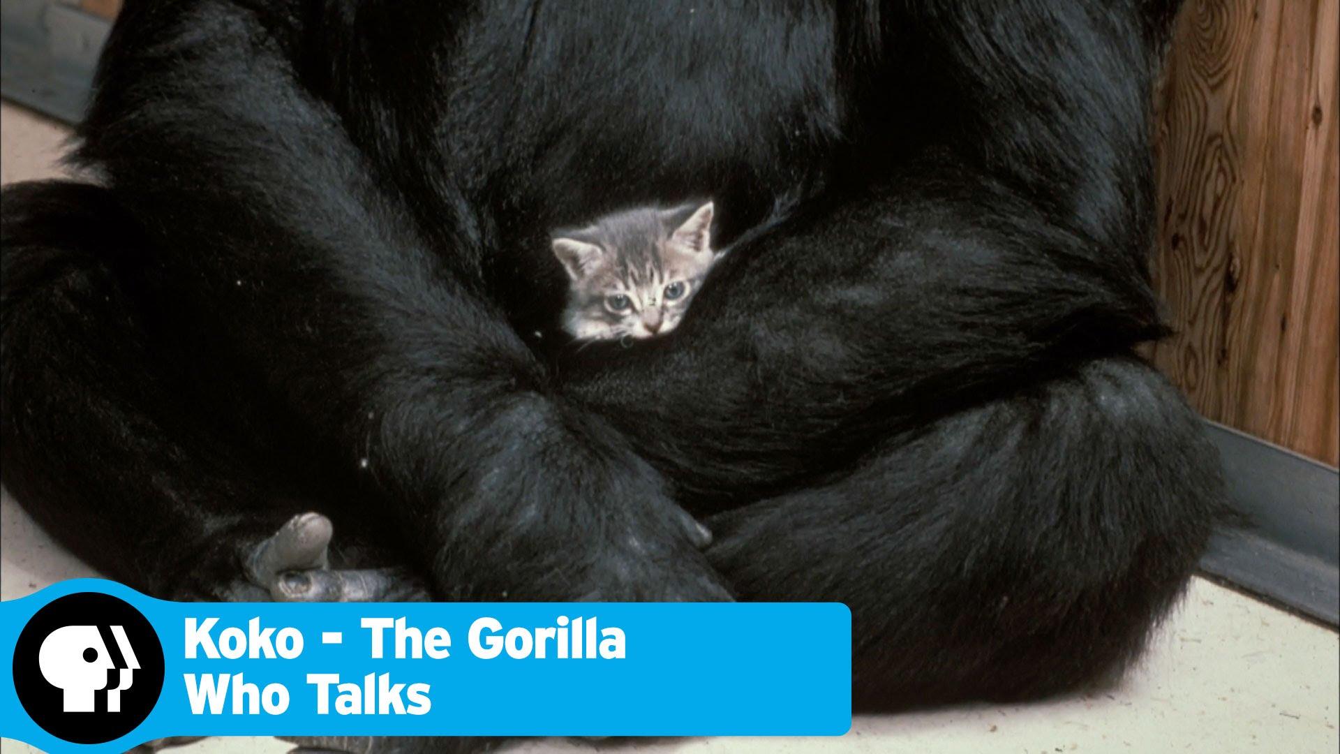 STAL SE ZÁZRAK: Tahle gorila umí mluvit znakovou řečí