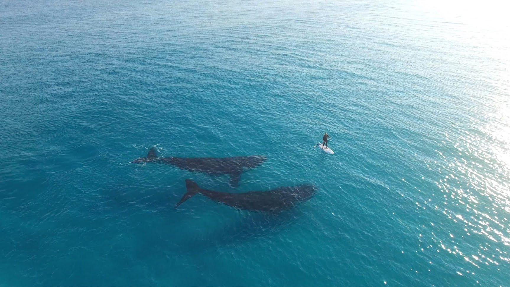 V blízkosti velryb – video, které navodí radost a pohodu