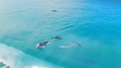 Úžasná relaxační terapie: Delfíni  – zvednou náladu i vám?