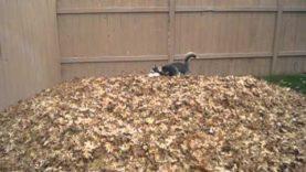 Jak se radovat z podzimu? Husky vám poradí!