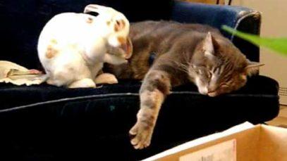 Jak si kdo ustele, tak si lehne… Maximální roztomilost v podání králíčka a kočičky